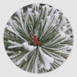 Snow-Covered Pine Needles Round Sticker