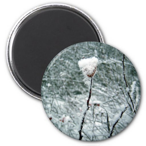 Snow Covered Red Berries 2 Magnet