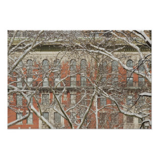 Snow Covered Tree 2 Poster