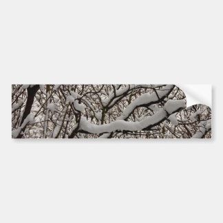 Snow covered tree branches bumper sticker