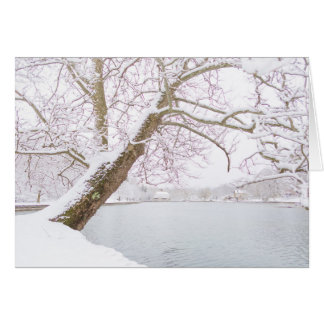 snow covered tree embraces pond card
