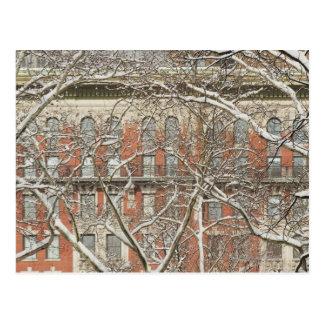 Snow Covered Tree Postcard
