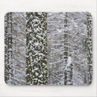 Snow covered tree trunks in Yosemite valley - Mouse Mat