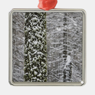 Snow covered tree trunks in Yosemite valley - Silver-Colored Square Decoration