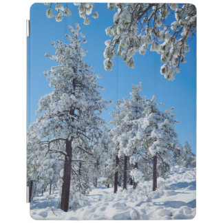 Snow-covered trees in the Laguna Mountains iPad Cover