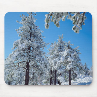 Snow-covered trees in the Laguna Mountains Mouse Pad