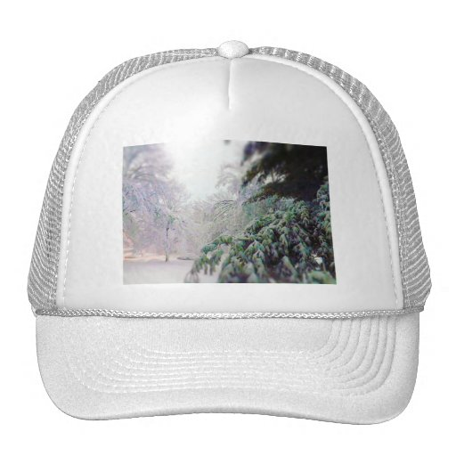 Snow Covered Trees, Pine on KC Street Hat