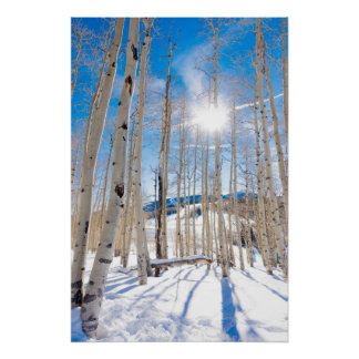 Snow Covered Woods in Beaver Creek, CO Poster