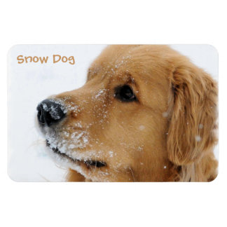 Snow Dog Golden Retriever Magnet