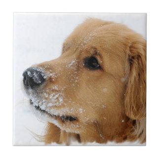 Snow Dog Golden Retriever Tile