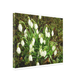 Snow drop canvas
