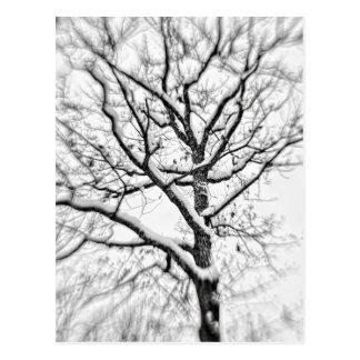 Snow Filled Tree Postcard