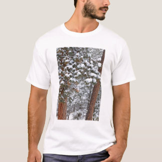 Snow fills the boughs of ponderosa pine trees T-Shirt
