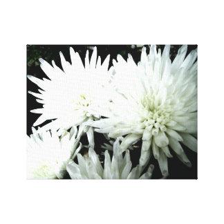 Snow Flower Black and White Chrysanthemum Canvas Canvas Print