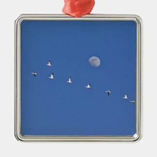 Snow geese and Canadian geese take flight at Christmas Ornament