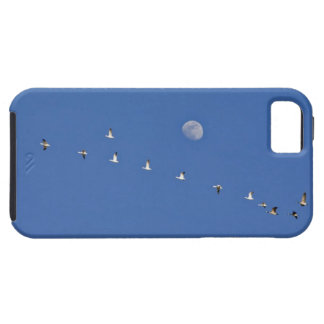 Snow geese and Canadian geese take flight at iPhone 5 Cases