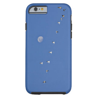 Snow geese and Canadian geese take flight at Tough iPhone 6 Case