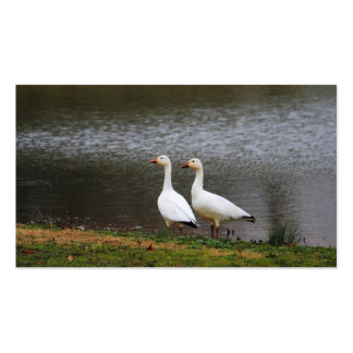 Snow Geese by the Pond Pack Of Standard Business Cards