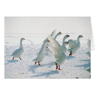 Snow Geese Cards