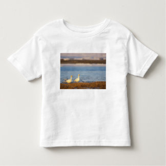 snow geese, Chen caerulescens, pair on a T Shirt