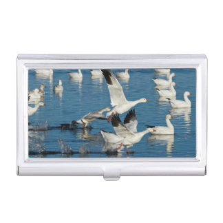 Snow Geese (Chen Caerulescens) Taking Off Business Card Holder