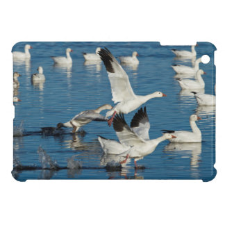 Snow Geese (Chen Caerulescens) Taking Off iPad Mini Case