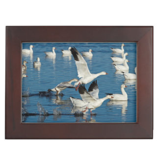 Snow Geese (Chen Caerulescens) Taking Off Keepsake Box
