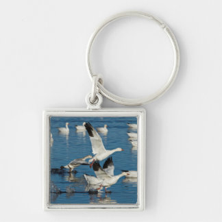 Snow Geese (Chen Caerulescens) Taking Off Key Ring