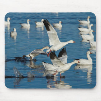 Snow Geese (Chen Caerulescens) Taking Off Mouse Mat