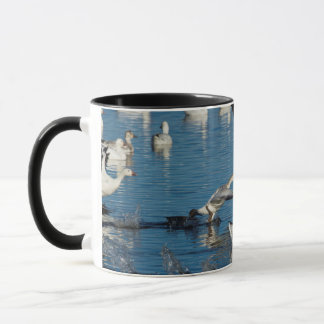 Snow Geese (Chen Caerulescens) Taking Off Mug
