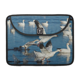 Snow Geese (Chen Caerulescens) Taking Off Sleeve For MacBook Pro