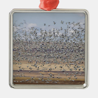 Snow geese during spring migration 3 Silver-Colored square decoration
