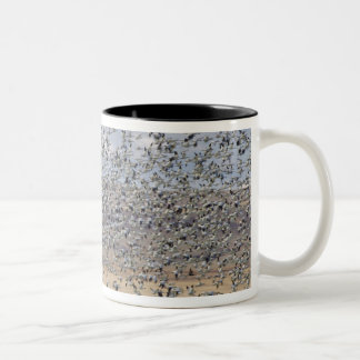 Snow geese during spring migration 3 Two-Tone coffee mug