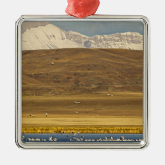 Snow geese during spring migration christmas ornament