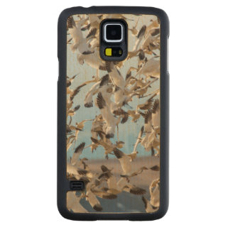Snow Geese Fill The Sky After Feeding In Barley Carved Maple Galaxy S5 Case