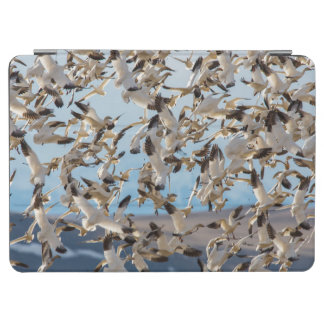 Snow Geese Fill The Sky After Feeding In Barley iPad Air Cover