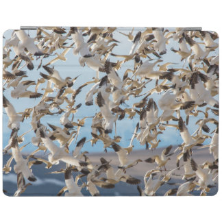 Snow Geese Fill The Sky After Feeding In Barley iPad Cover