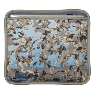 Snow Geese Fill The Sky After Feeding In Barley iPad Sleeve