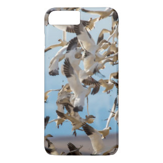Snow Geese Fill The Sky After Feeding In Barley iPhone 8 Plus/7 Plus Case
