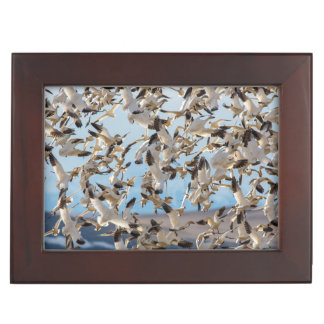 Snow Geese Fill The Sky After Feeding In Barley Memory Boxes