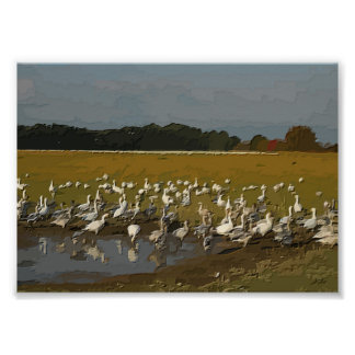 Snow Geese Gathering Engraved Poster