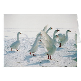Snow Geese Xmas Holiday Christmas Blank Inside Card