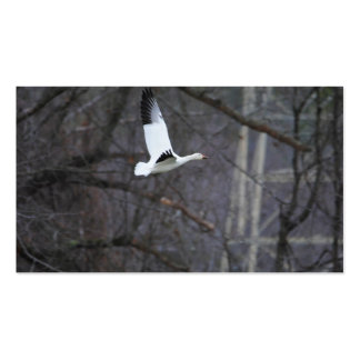 Snow Goose in Flight Pack Of Standard Business Cards