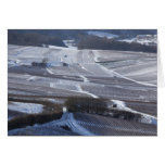 Snow in Champagne Greeting Cards