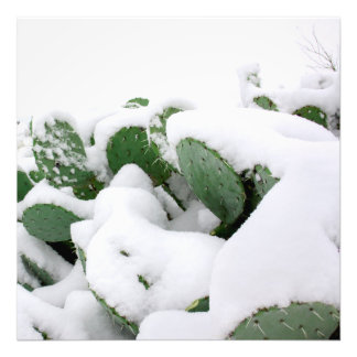 Snow in the Desert 2 Photograph