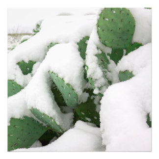 Snow in the Desert Photograph