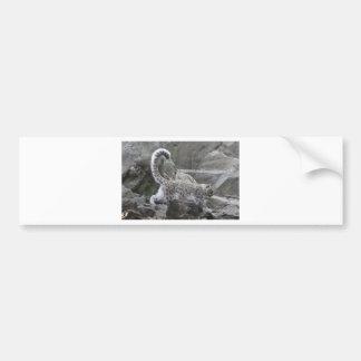 snow leaopard bumper sticker
