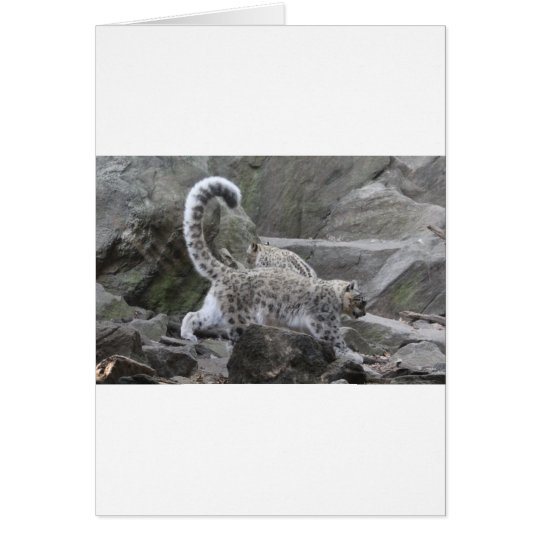 snow leaopard card