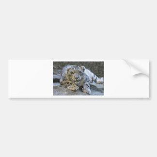 snow-leopard-1006-eop bumper sticker
