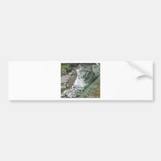 Snow Leopard 1 Bumper Sticker